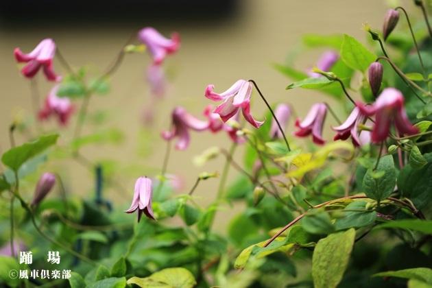gardening_4293.JPG