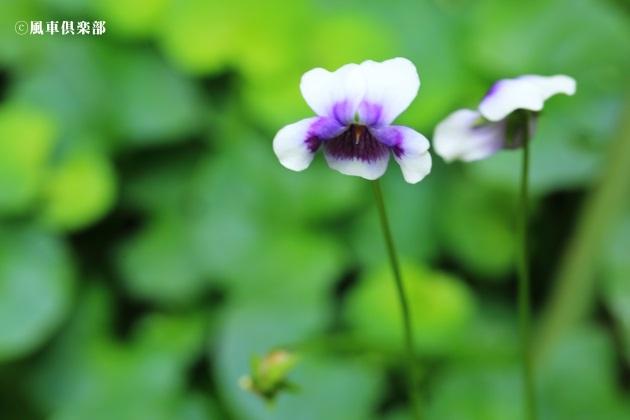 gardening_4298.JPG