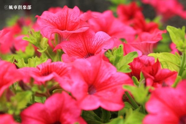 gardening_4299.JPG