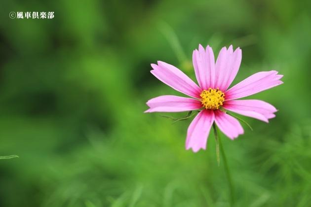 gardening_4301.JPG