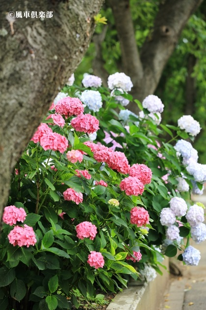 gardening_4304.JPG