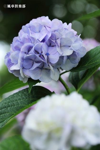 gardening_4305.JPG