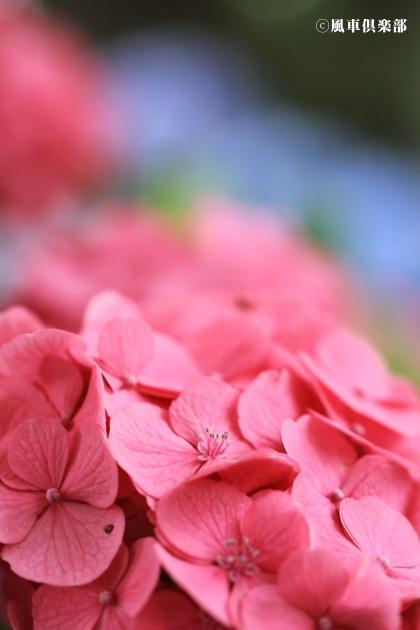 gardening_4306.JPG