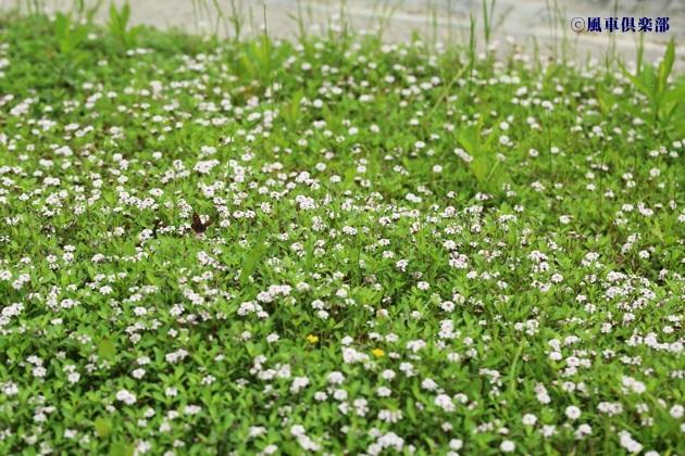 gardening_4308.JPG