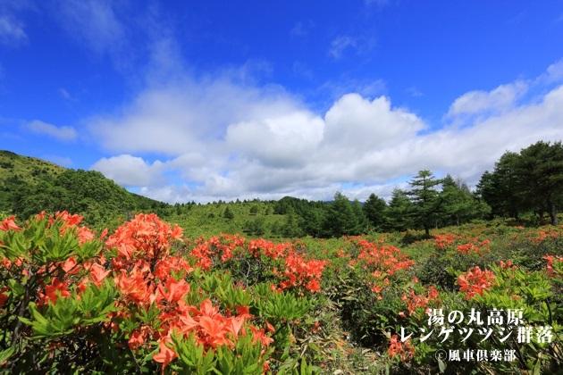 gardening_4314.JPG