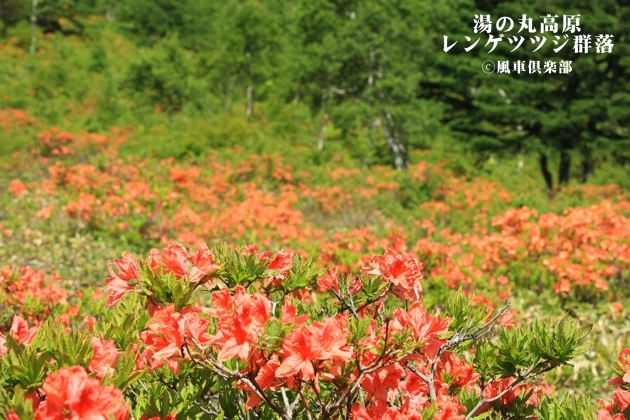 gardening_4315.JPG