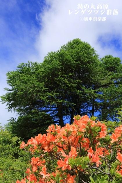 gardening_4318.JPG