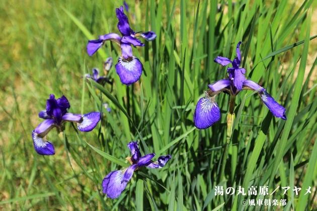 gardening_4319.JPG