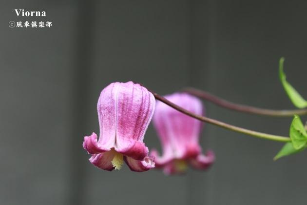 gardening_4324.JPG