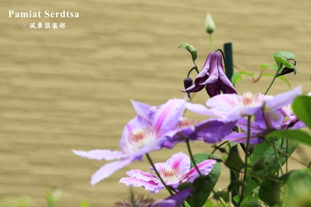 gardening_4326.JPG