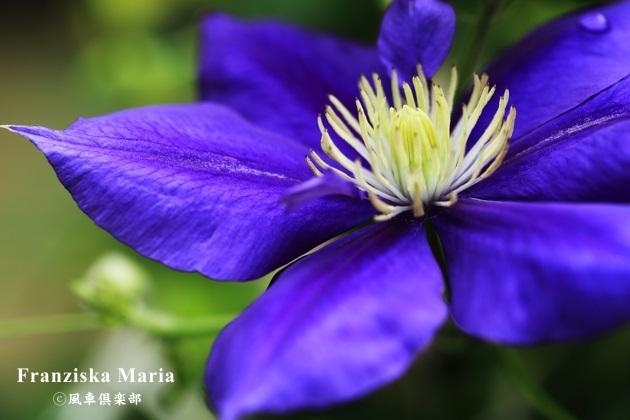 gardening_4327.JPG