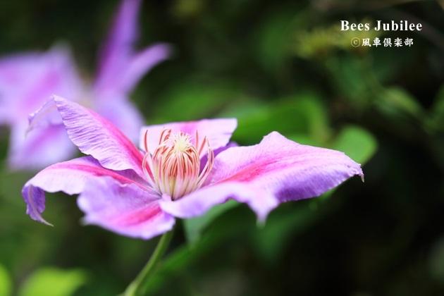 gardening_4328.JPG