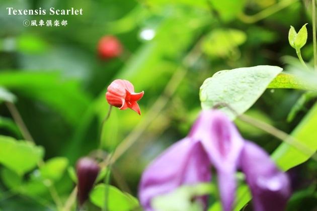 gardening_4330.JPG