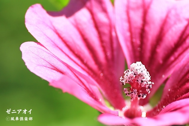 gardening_4334.jpg