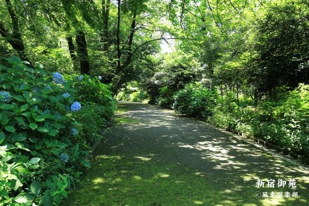 gardening_4339.JPG