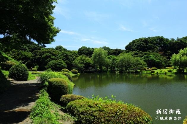gardening_4341.JPG