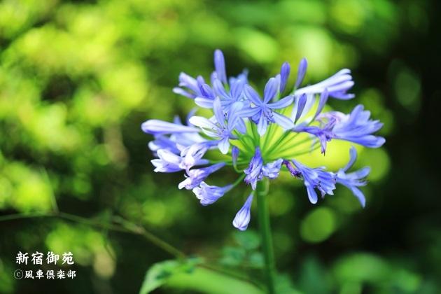 gardening_4349.JPG