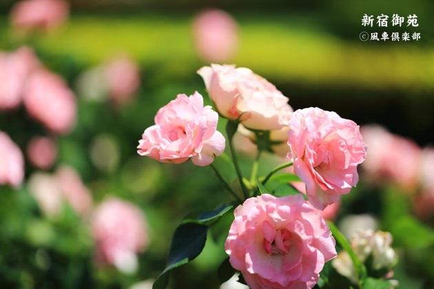 gardening_4352.JPG
