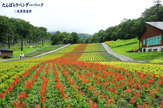 gardening_4353.JPG
