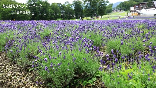 gardening_4354.JPG