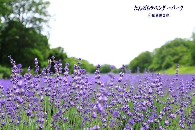 gardening_4355.JPG