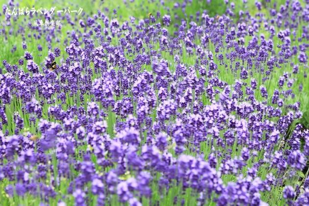 gardening_4356.JPG
