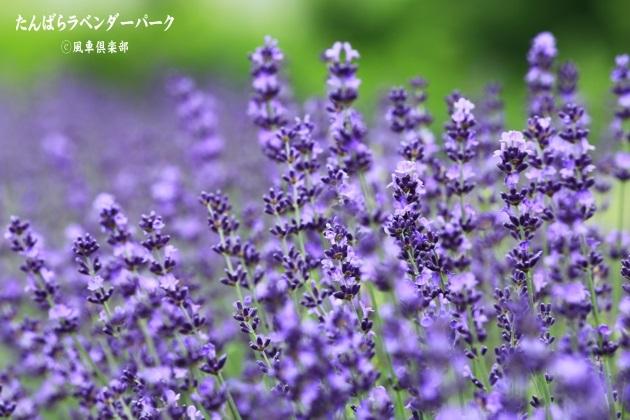 gardening_4357.JPG
