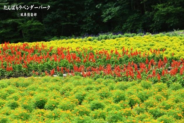 gardening_4358.JPG