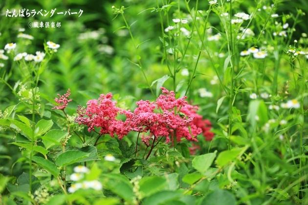 gardening_4360.JPG