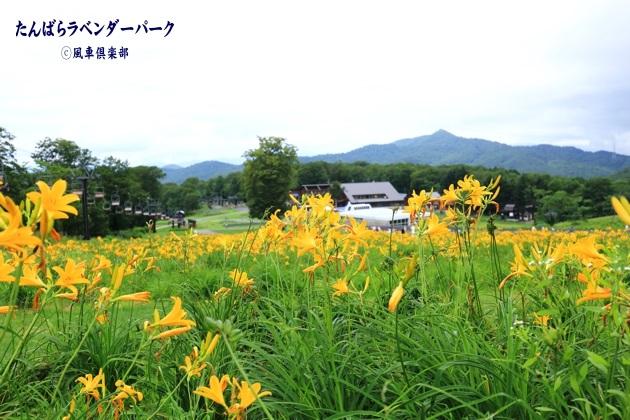 gardening_4361.JPG