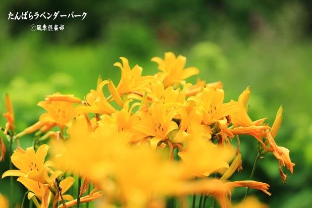 gardening_4362.JPG
