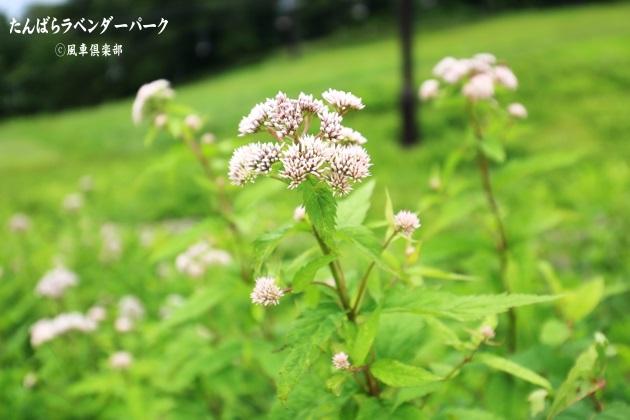gardening_4364.JPG