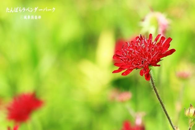 gardening_4365.JPG