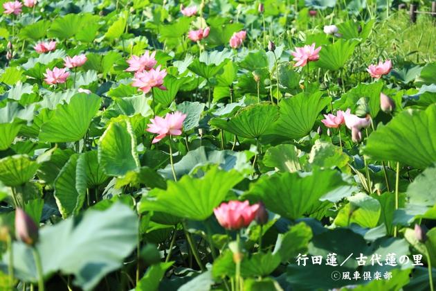 gardening_4366.JPG