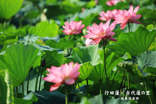 gardening_4367.JPG