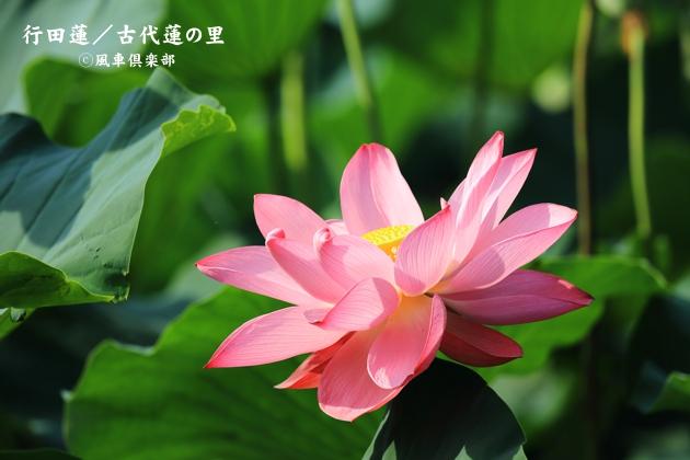 gardening_4368.JPG