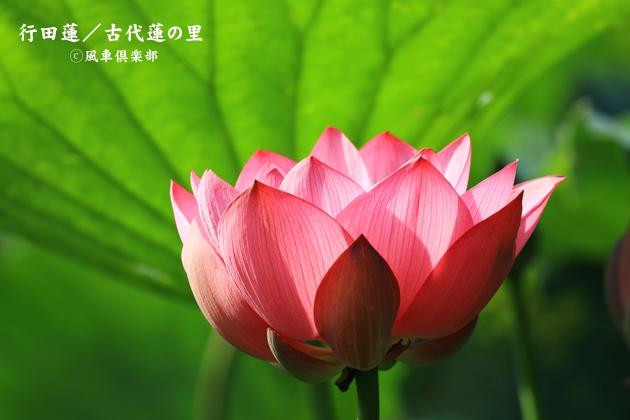 gardening_4369.JPG