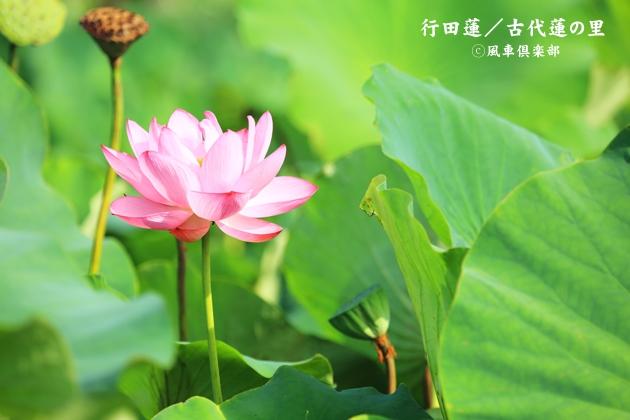 gardening_4370.JPG