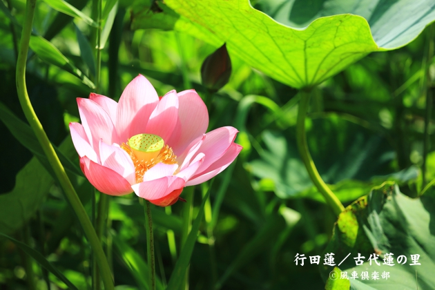 gardening_4371.JPG