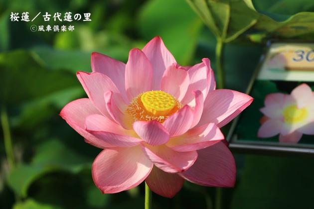 gardening_4372.JPG