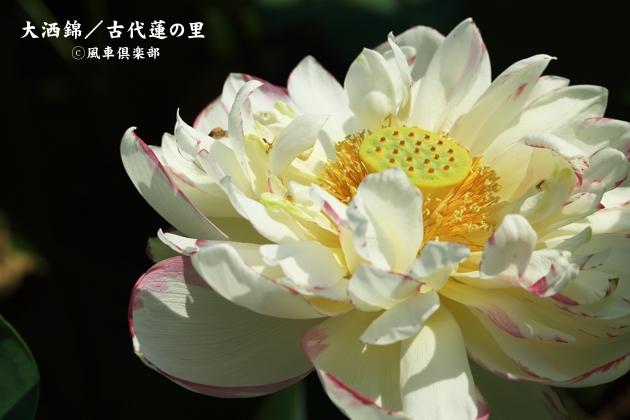 gardening_4373.JPG