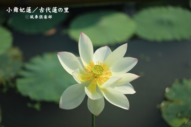 gardening_4375.JPG