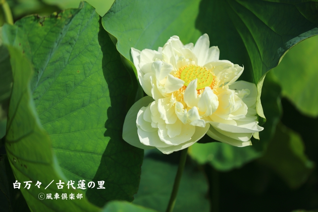 gardening_4376.JPG