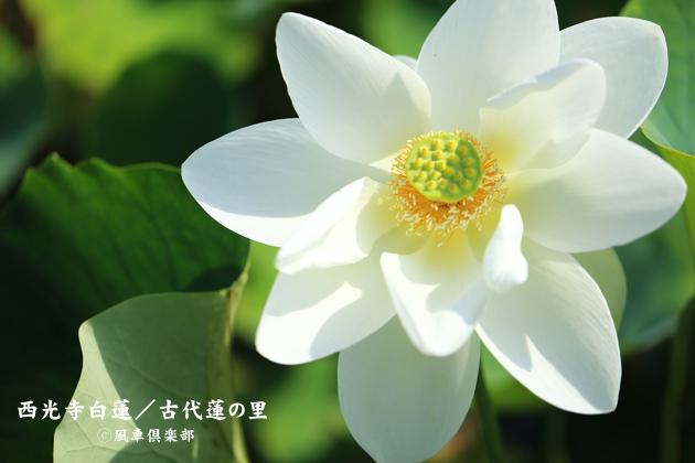 gardening_4377.JPG