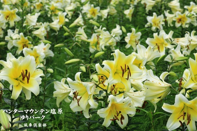 gardening_4424.JPG