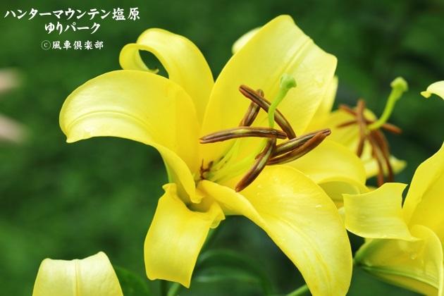 gardening_4427.JPG