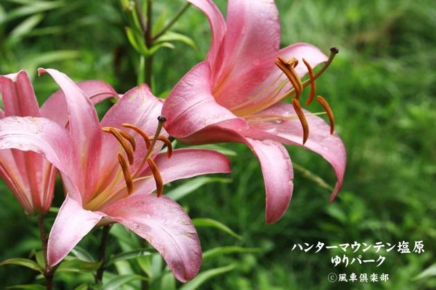 gardening_4430.JPG