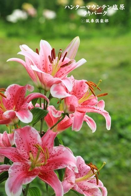 gardening_4431.JPG