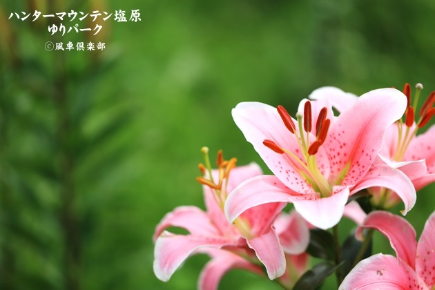 gardening_4432.JPG