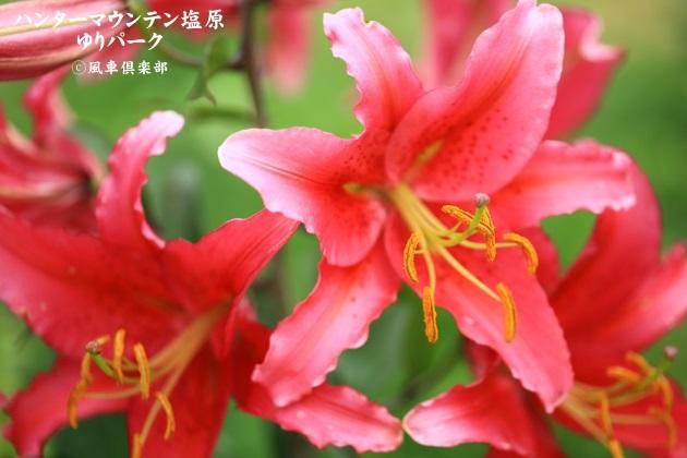 gardening_4433.JPG